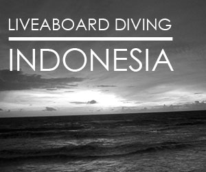 liveaboard diving indonesia