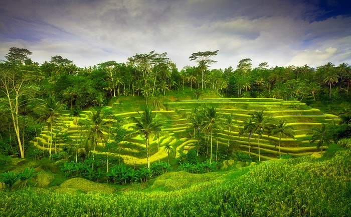 Nyaman Group indonesia-Privilege club-Exclusive member privilege-Ubud Tour