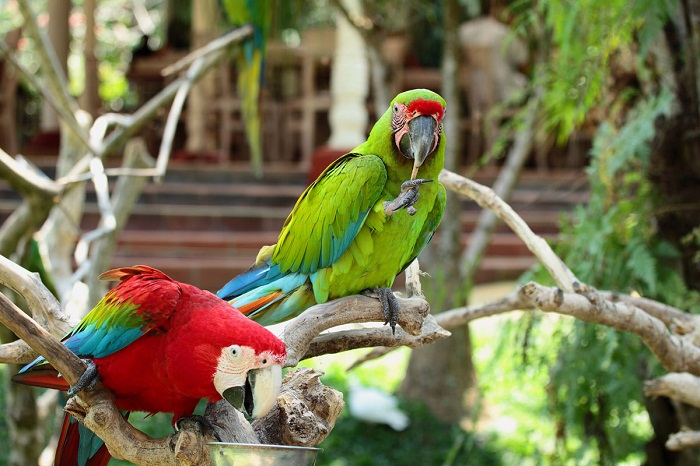 Nyaman Group indonesia-Privilege club-Bali Bird Park