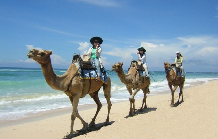 Nyaman Group indonesia-Privilege club-Camel Tour in Bali