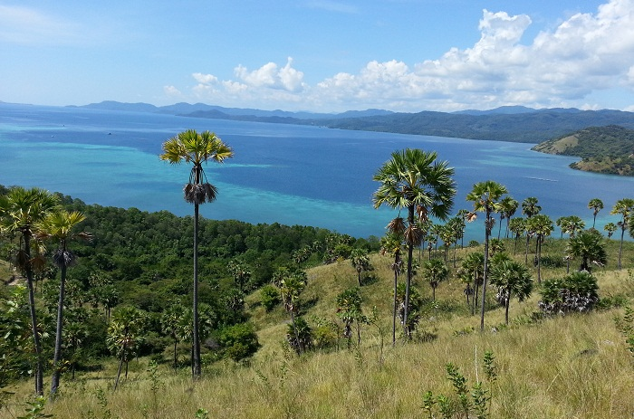 Nyaman Group Indonesia-Real Estate Flores-land with sea view on Flores island