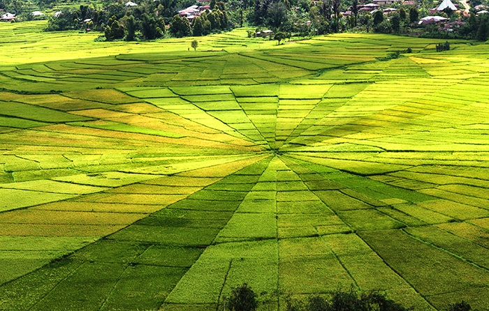Amazing spider rice fields in Ruteng, Flores