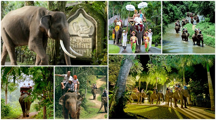 Nyaman Group Indonesia-Exclusive member privilege-Bali Elephant tour