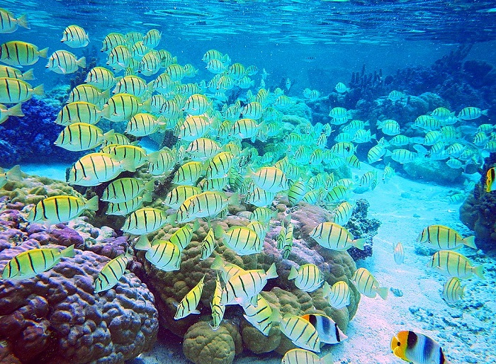 Discover Alor Ambon, one of the last unspoiled diving destination on the planet