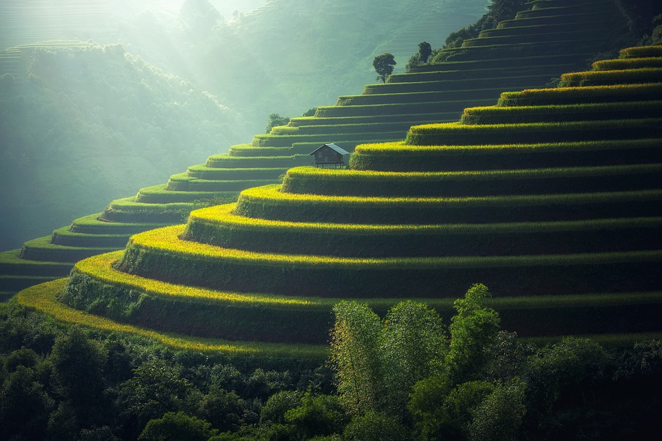A peacefull trip in Ubud to discover the wonderfull nature and culture of Bali